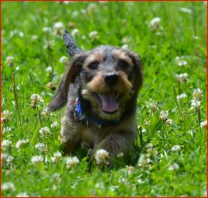 Zwuckel im Gras