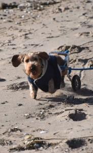 zwuckel Rollstuhl