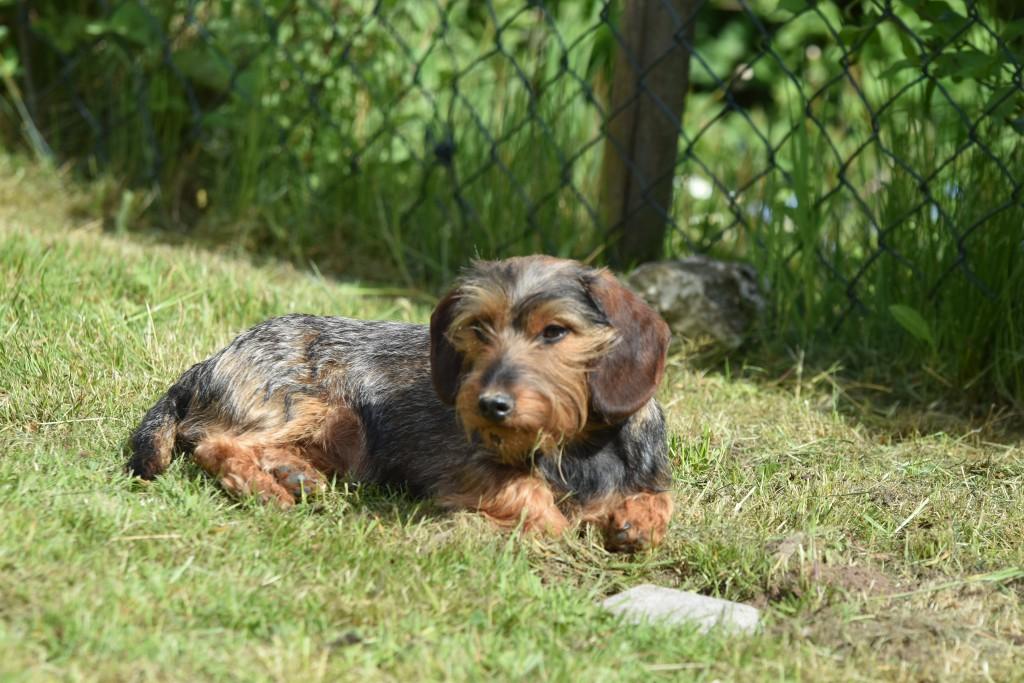 Wilma am Sonnenbaden