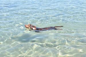 Bella und das Meer