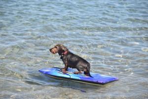 Wilma beim Surfen