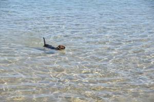 Wilma und das Meer