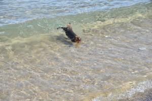 Wilmas Kampf mit den Wellen