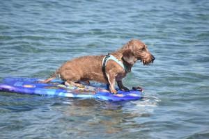 Zwuckel beim Surfen