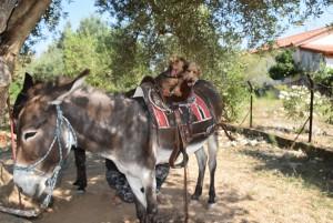 Zwuckel und Wilma auf dem Esel 1
