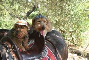 Zwuckel und Wilma auf dem Esel 2